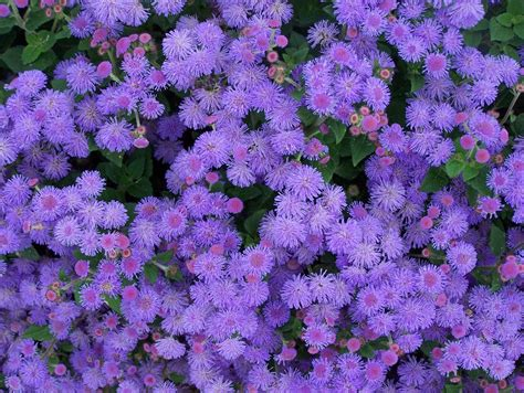 Annuals For Planters by And Summer Annuals Louisiana Nursery