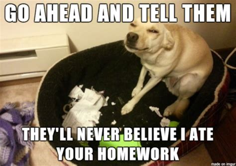 my had puppies and they all died my ate my homework and other excuses better than luis suarez s i lost my
