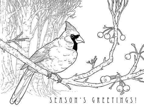 cardinal coloring page illustrated 25 designs to color karyn