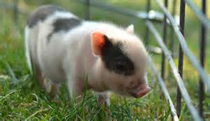 Bats In Backyard Let S Let Out A Collective Quot Awww Quot For These 20 Baby Pigs