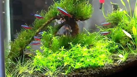 Fluval Spec V Aquascape by Fluval Spec 5 Aquascape