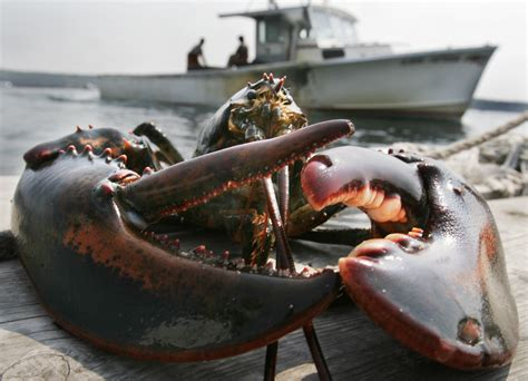 lobster boat sternman a day in the life of a maine lobsterman business insider