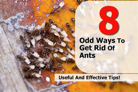 8 ways to get rid of ants