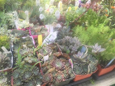 are you ready to bring your succulents in for the winter