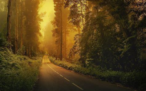 la route au milieu de la foret regarder milieux naturels