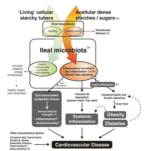 a cellular carbohydrates ian spreadbury gut bacteria ancestral carbohydrates vs