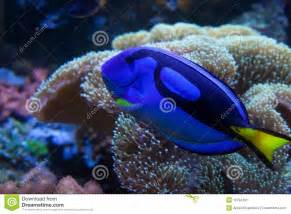 Rare Exotic Freshwater Aquarium Fish Exotic Aquarium Fish Stock Image