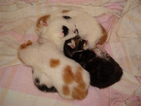 how to take care of a 4 week puppy how to take care of newborn kittens week by week