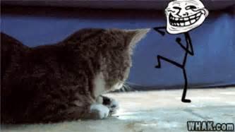 Cat Meme Gif - poseidon215