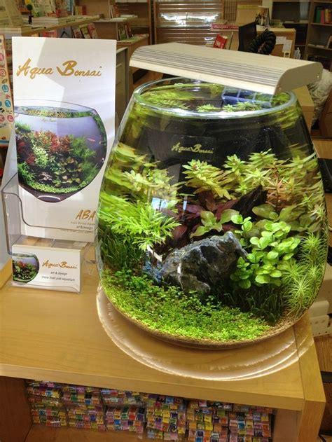 aqua terrarium designs 156 best images about planted nano aquariums on betta fish tank mini aquarium and
