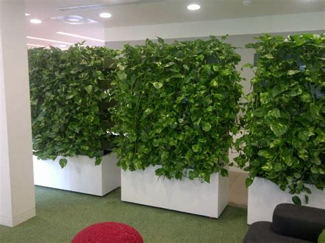 mobile living wall units  versatile office planting