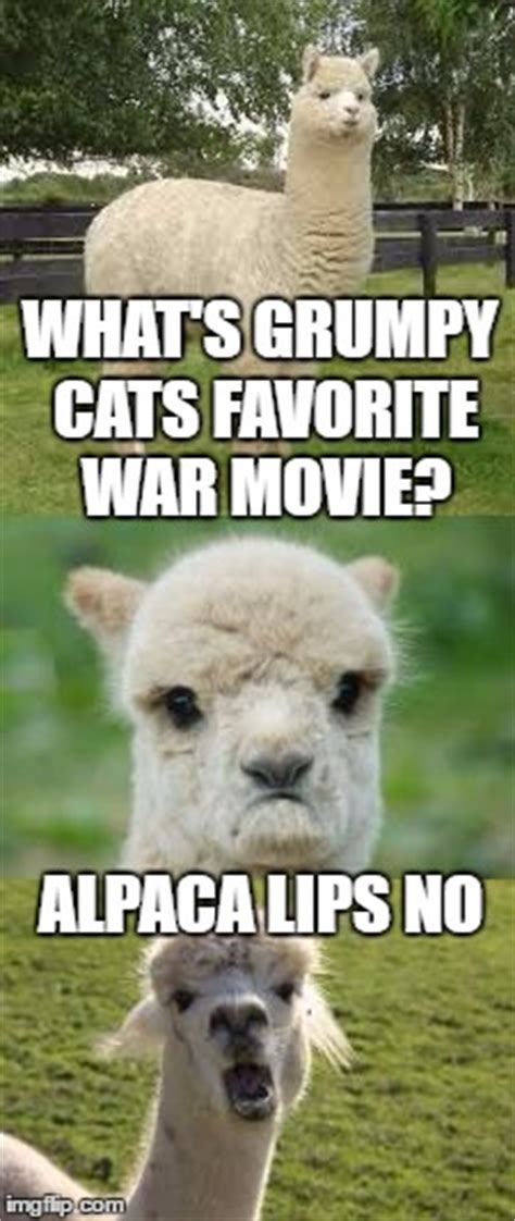 alpaca bad pun memes gifs imgflip