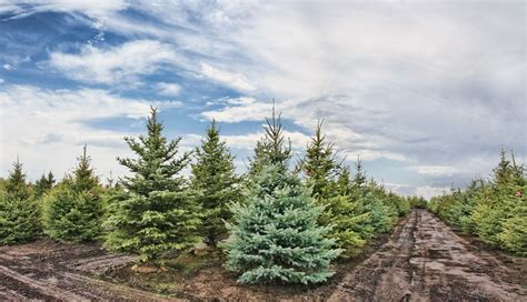 christmas tree farm archives philadelphia magazine