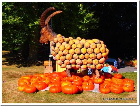 pumpkin displays ludwigsburg pumpkin festival living outside of the box
