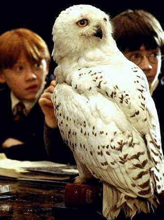 harry potter pet   meant   harry potter movies harry potter harry potter