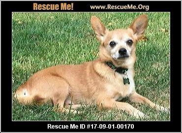 pomeranian rescue iowa iowa pomeranian rescue adoptions rescueme org