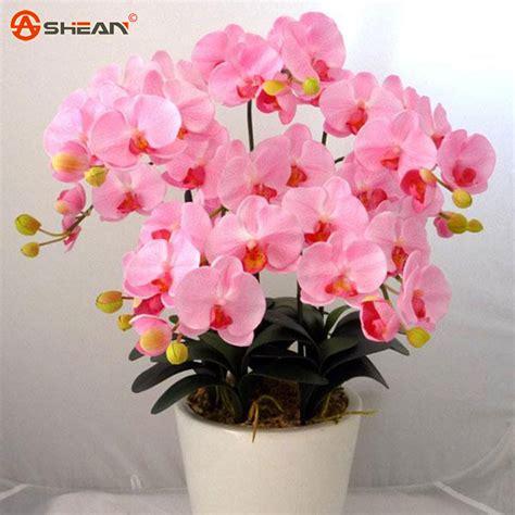 orchideen samen kaufen kaufen gro 223 handel samen orchidee aus china samen