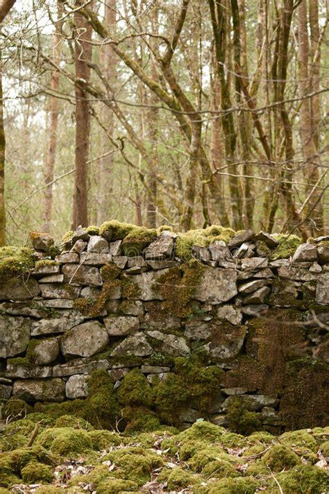 alte steinwand alte steinwand stockbild bild wald moos wand