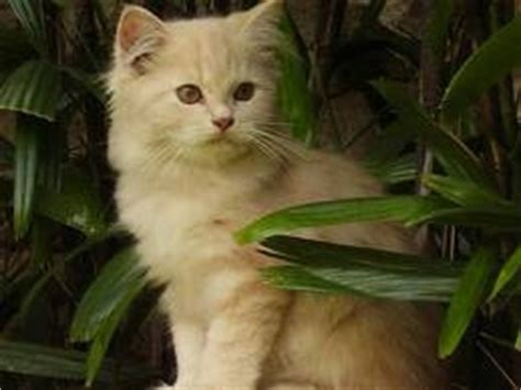Vitamin Kucing Vitagel By Nd Pets cat
