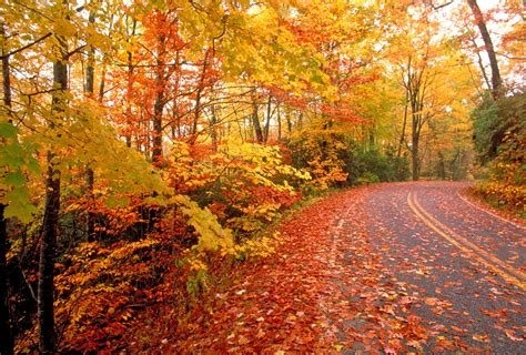 fall colors best time for fall colors wmbfnews com myrtle beach