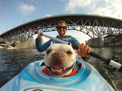 best kayak for dogs interesting photo of the day meet the kayaking