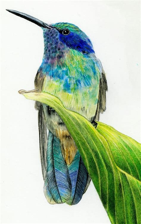 pencils that change colors colour pencil sketch birds how to draw a hummingbird