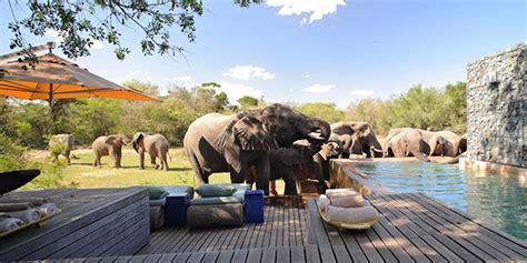 phinda private game reserve  safari  south africa