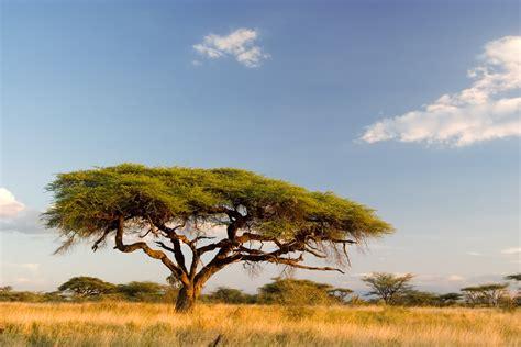 Landscape Pictures In South Africa Landscape Landscape Africa