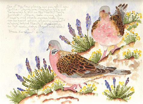 turtle doves an artist s perspective saving species our work the rspb community