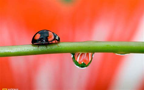 Japan Home Design Magazine by Spring Rain Ladybug Animal Wallpapers Free Download