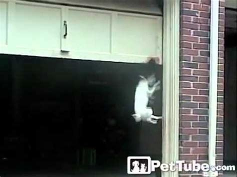 The World S Biggest Dog Door Pettube Youtube Cat Doors For Garage Doors
