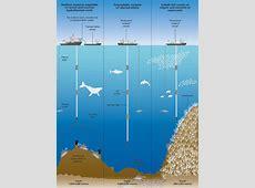 Deep-Sea Mining Could Destroy Marine Ecosystems, Study ... Manganese Nodules Ocean Floor