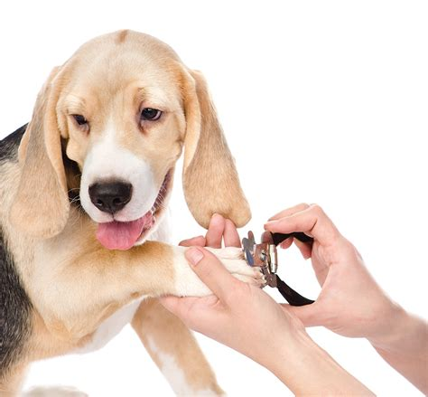 puppy pet grooming cbell pet grooming dr dave s daycare boarding grooming
