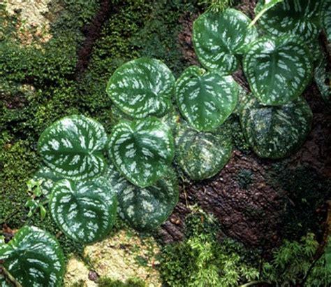 Plants From The Tropical Rainforest - rainforest plants tropical rainforest plants funny pictures