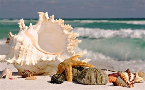 shell wallpaper sea shells sea beach sand wallpaper 7 o
