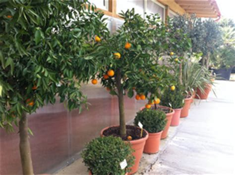 vendita piante da giardino on line piante da giardino vendita on line idee per interni e mobili
