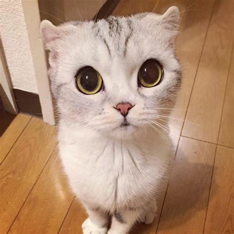 cat wallpaper nippon meet hana a japanese kitty with incredibly big eyes who