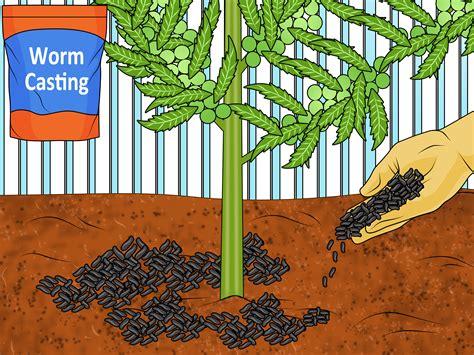 ways  fertilize  garden cheaply wikihow