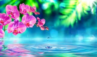 orchid blue water reflection flowers beautiful orchid reflection of pink orchids other abstract background