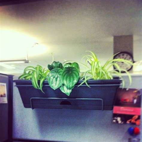 Cubicle Planters by Pin By On Grow