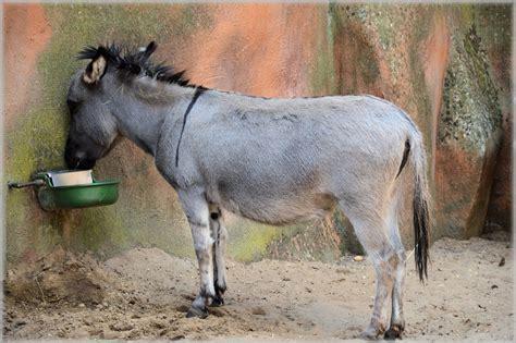 burro animal foto gratis burro mula culo animales imagen gratis