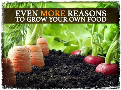 your own food even more reasons to grow your own food preparing for shtf