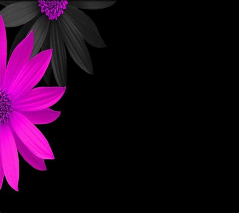 beautiful flower wallpaper zedge pink black flowers 176 cute wallpapers
