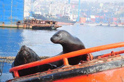 boat tour valparaiso best santiago day trips santiago chile city tours travel