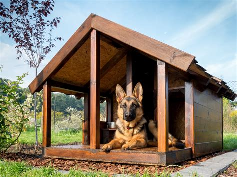 dog house with kennel diy dog kennel building tips dogslife dog breeds magazine