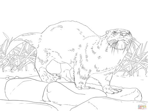 otter coloring pages preschool otter coloring pages preschool images