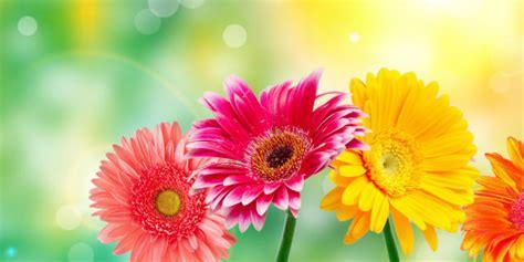 ci fiori il linguaggio dei fiori in 5 punti roba da donne