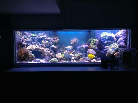 Lu Led Untuk Aquarium pilihan lu led orphek atlantik oleh pelanggan orphek