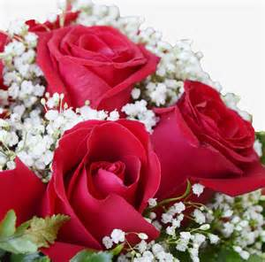 Best gift for her images of flowers love flowers online flowers in