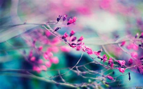 imagenes de rosas lindas preciosas de fondo de pantalla imagenes de صور خلفيات ipad احلي واجمل خلفيات ايباد hd سوبر كايرو